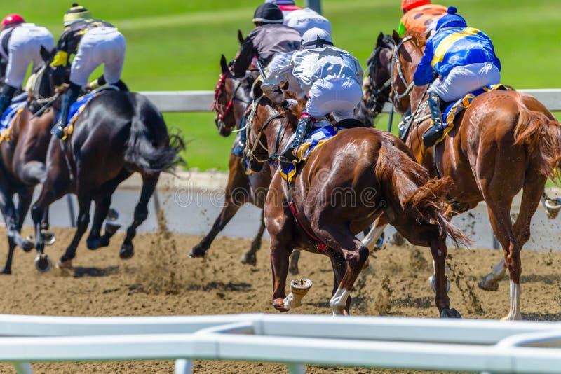 Wyścigi Konny zwierzęta Wali tyły Szlakową akcję obraz royalty free