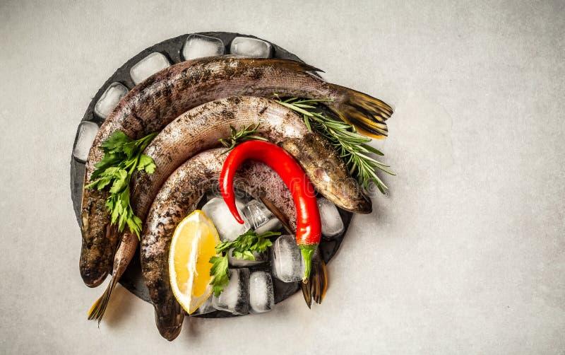 Wyśmienicie świeża ryba na rocznika tle Łowi z aromatycznymi ziele, pikantność, warzywa, dieta i kucharstwo, - zdrowy jedzenie, fotografia royalty free