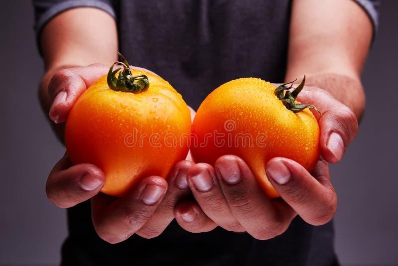 Wyśmienicie domowej roboty pomidor w mężczyzna ` s ręce fotografia royalty free