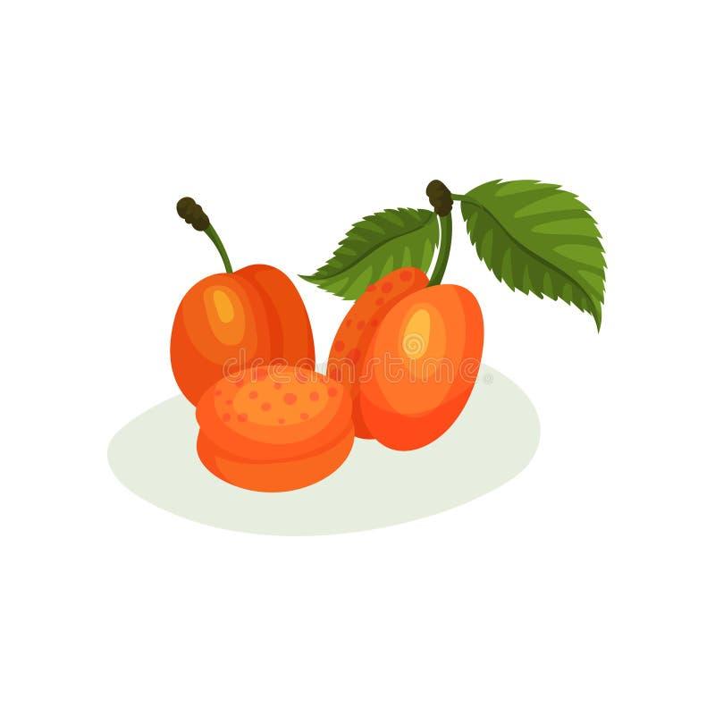 Wyśmienicie morele z zielonymi liśćmi Naturalna świeża żywność Dekoracyjny płaski wektorowy element dla soku pakować lub słoju ilustracja wektor
