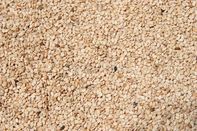 Download Wyłuszczeni Nasiona Sezamowi Surowe Zdjęcie Stock - Obraz złożonej z surowy, odżywczy: 125780
