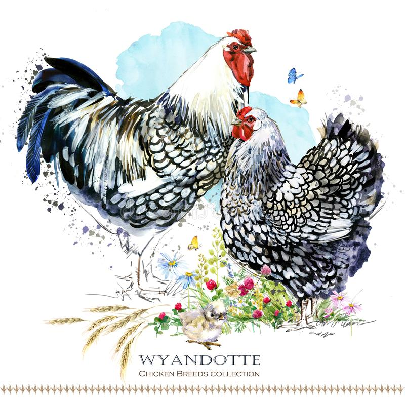 Wyandotte Chicken breed. Poultry farming. domestic farm birdFriesian vector illustration