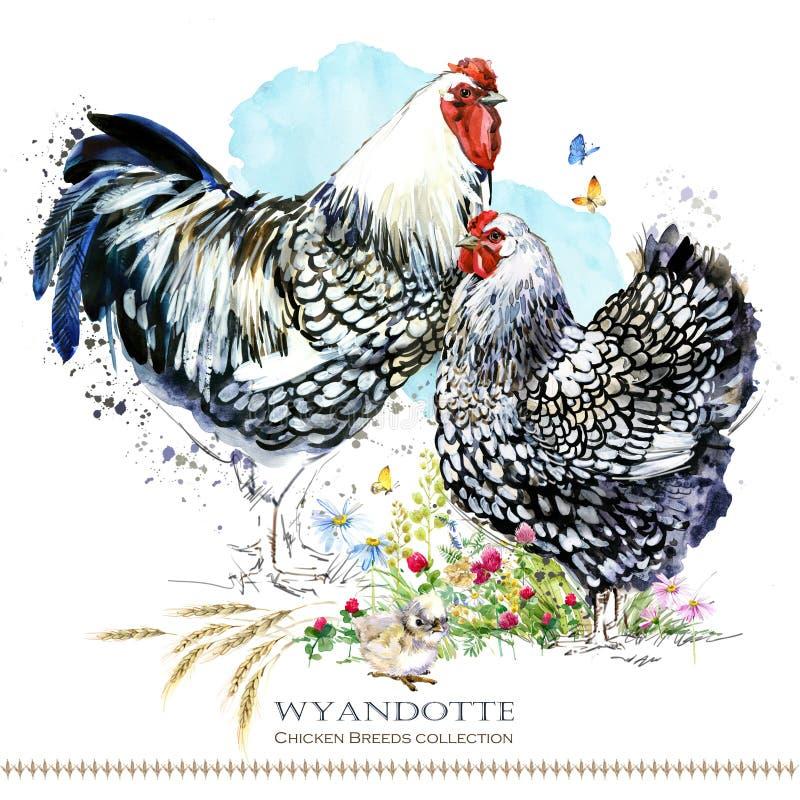 Wyandotte hönaavel Hönslantbruk birdFriesian inhemsk lantgård vektor illustrationer