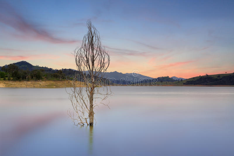 Wyangala Waters Australia. A lone tree stands naked in the Wyangala Waters at Wyangala, Central West NSW. Wyangala Waters holds two and half times more water stock photography
