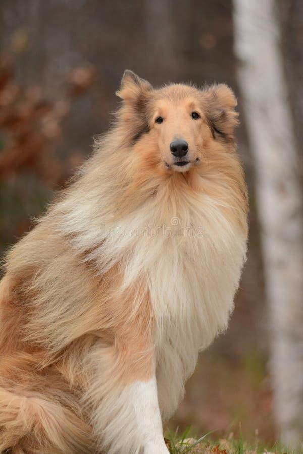 Wyatt Model Dog royaltyfri fotografi