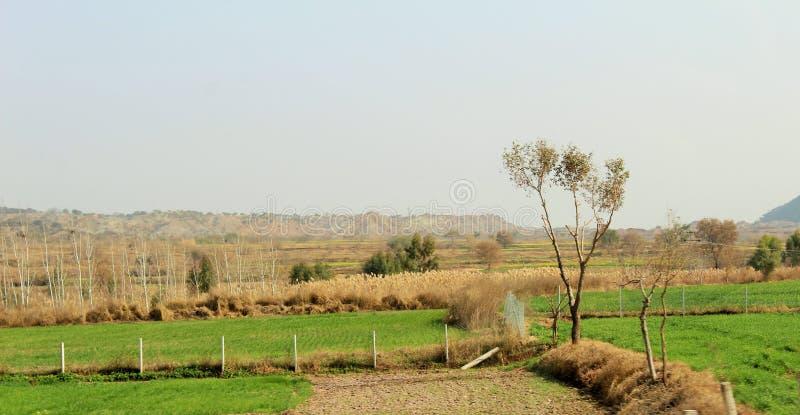 Wybitny widok drzewa i pola w jesieni obraz royalty free
