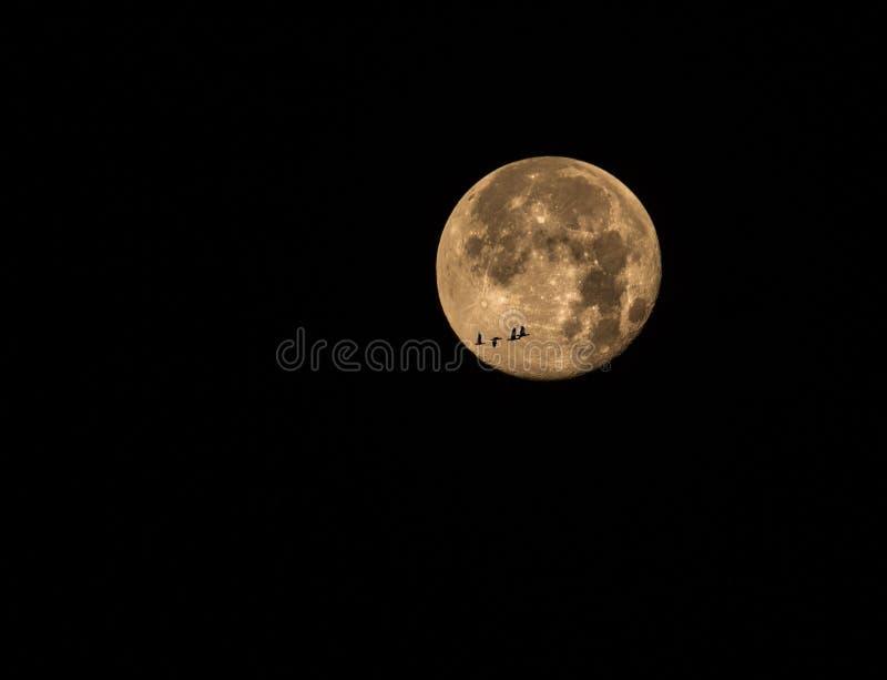 Wyborowa księżyc fotografia royalty free