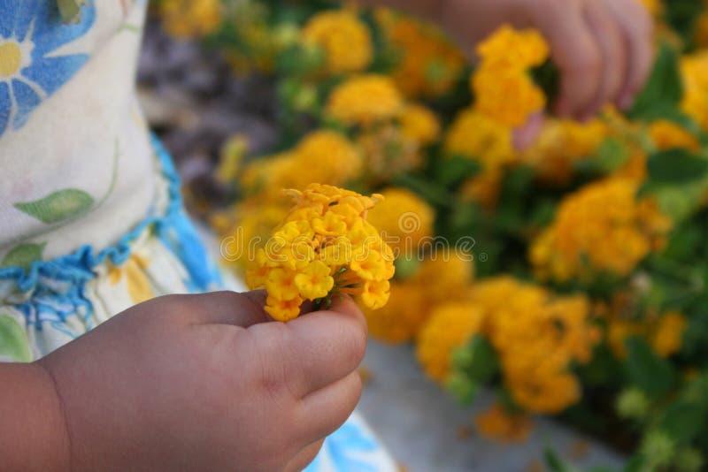 wybrać kwiaty, obrazy royalty free