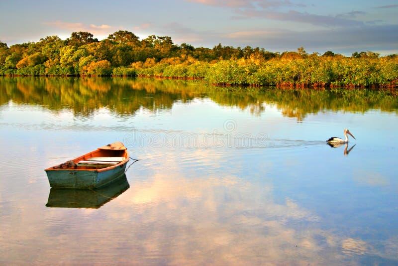 wybrzeża australii noosaville słońce zdjęcia royalty free