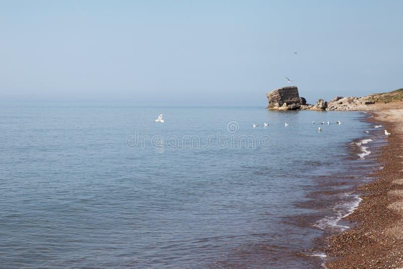 wybrzeże baltic fotografia stock
