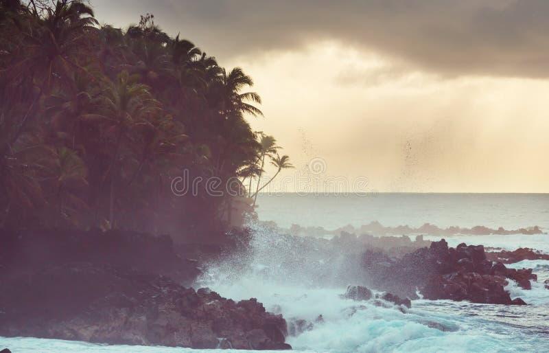 wybrzeże hawajska zdjęcia stock