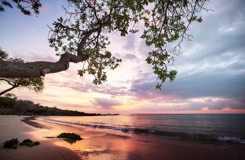 wybrzeże hawajska obrazy stock