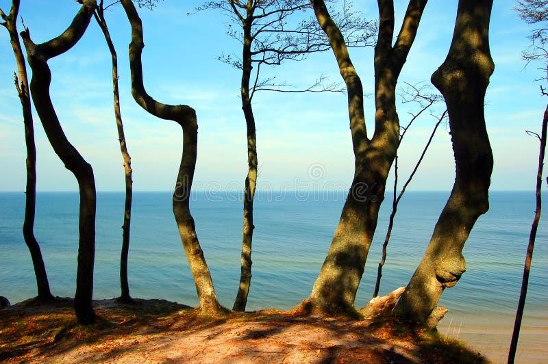 wybrzeże las zdjęcia stock