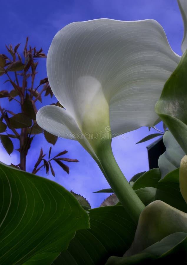 Download Wybuch wiosna obraz stock. Obraz złożonej z błękitny, nadzieja - 144247