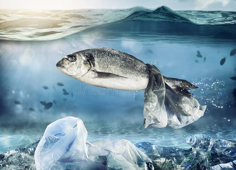 Wychwytana ryba spławową torbą Problem plastikowy zanieczyszczenie pod dennym pojęciem zdjęcia royalty free