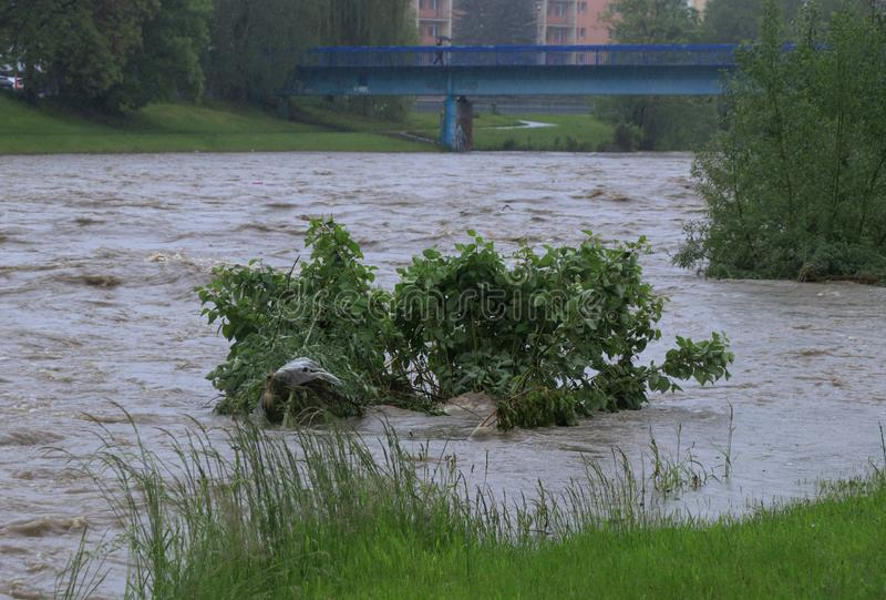 Wychwytany krzak w wysokiej wodzie po długich deszczowych dni Rzeka jest na wysokim poziomie, tylko few centymetry brakuje dla ro obrazy royalty free