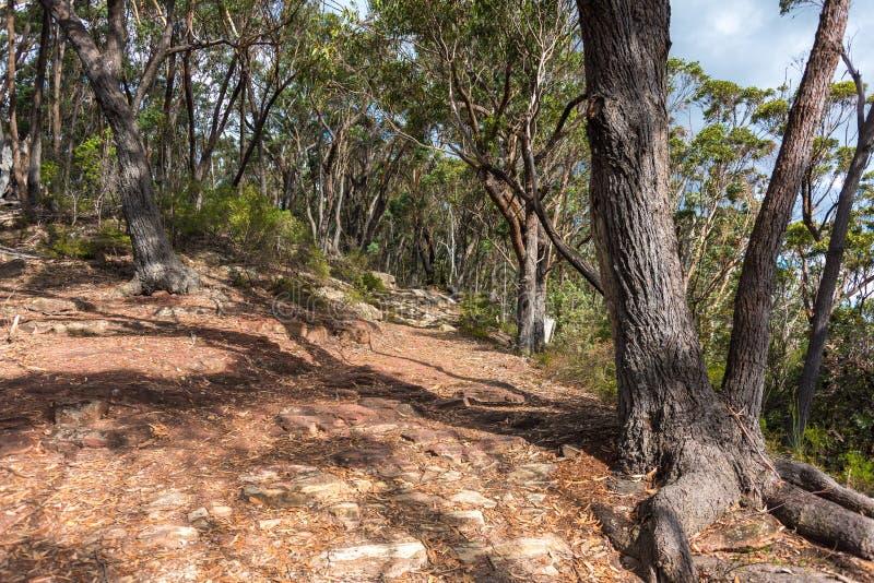 Wycieczkować ścieżkę, ślad w lesie na słonecznym dniu zdjęcia royalty free