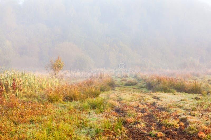Wycieczkować ścieżki na cumującym w mgle fotografia stock