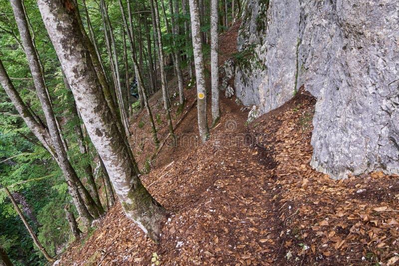 Wycieczkować ślad przez halnego lasu zdjęcie stock