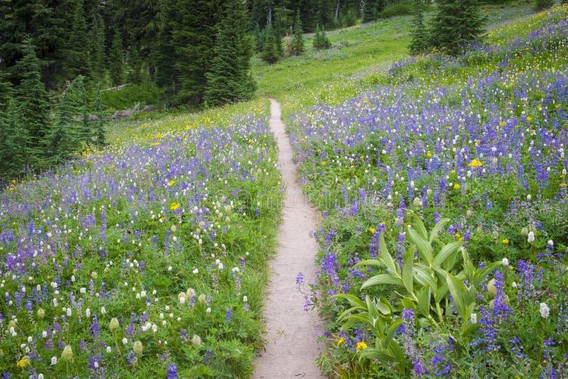 Wycieczkować ślad przez pola wildflowers fotografia stock