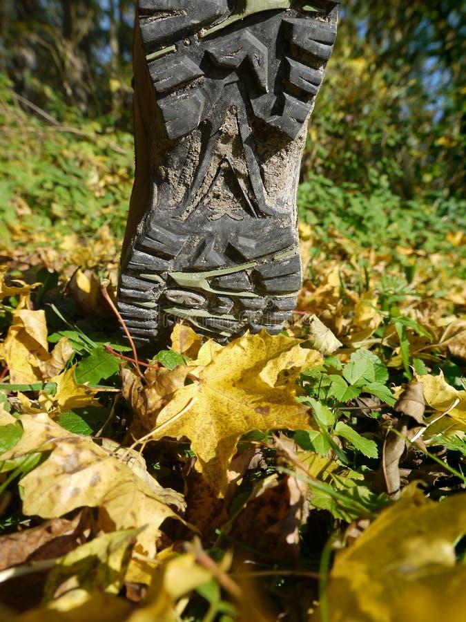 Wycieczkować jesień but obraz stock