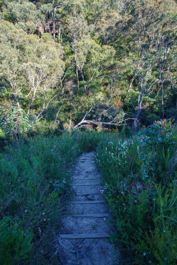 Wycieczkować uroczystego clifftop spacer, błękitne góry, Australia 2 fotografia stock