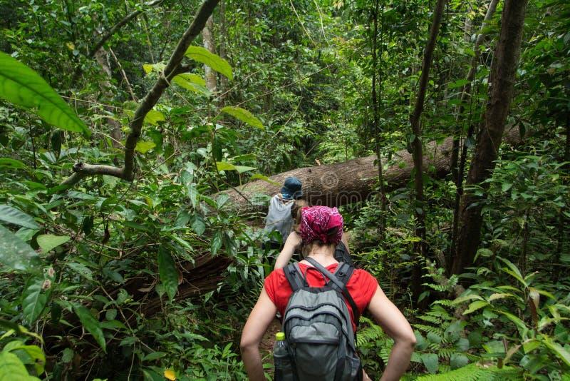 Wycieczkować w głębokiej dżungli fotografia royalty free