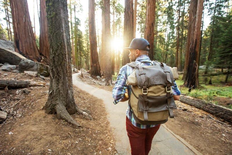 Wycieczkowicz w sekwoja parku narodowym w Kalifornia, usa zdjęcia royalty free