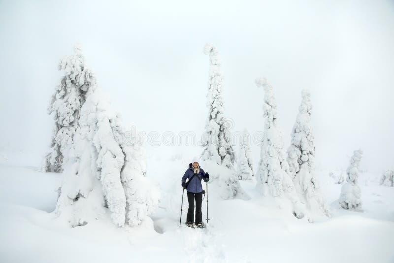 Wycieczkowicz w zamarzniętym krajobrazie Fiński Lapland fotografia royalty free