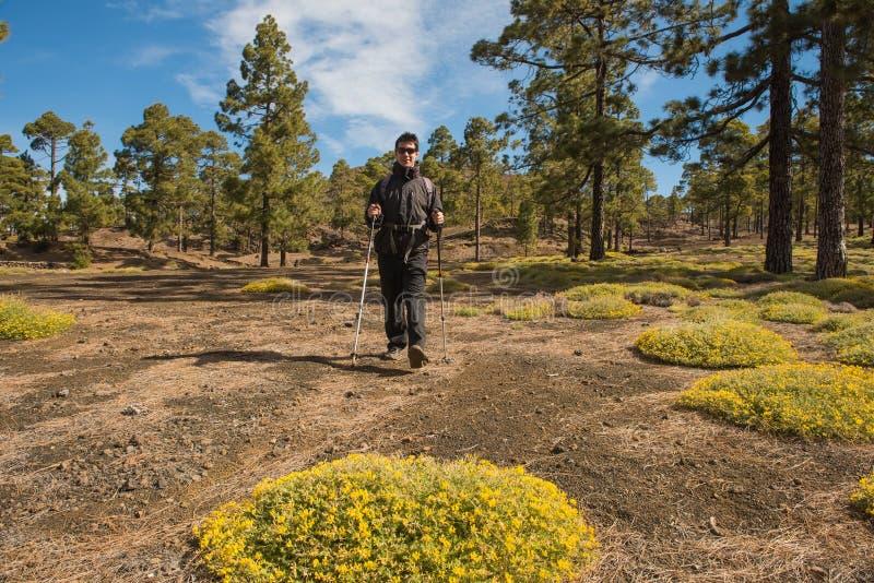Wycieczkowicza mężczyzna wycieczkuje w lasowym Tenefire, kanarek obrazy royalty free