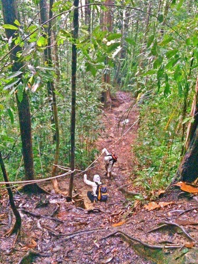 Wycieczkowicze wspina się downslope w tropikalnym lesie deszczowym zdjęcie royalty free