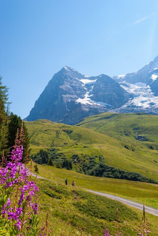 Wycieczkujący ślad na tle oszałamiająco Alpejska panorama Północna ściana szczytowy Eiger, Grindelwald, Bernese Alps, zdjęcie royalty free