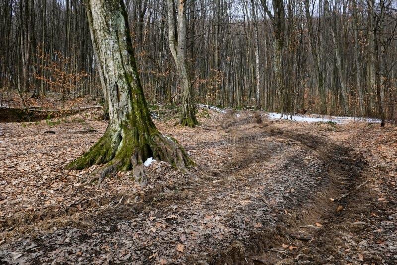 Wycieczkujący ślad w lesie w wiośnie lub jesieni przyprawia w Karpackich górach zdjęcie stock