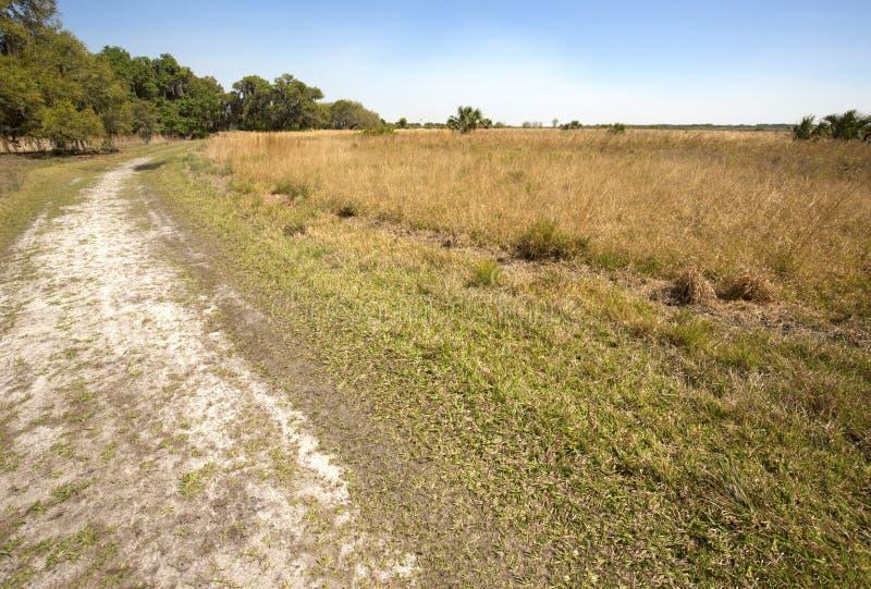 Wycieczkujący śladu cewienie przez Floryda szoruje przy Jeziorną Kissimmee normą obraz stock