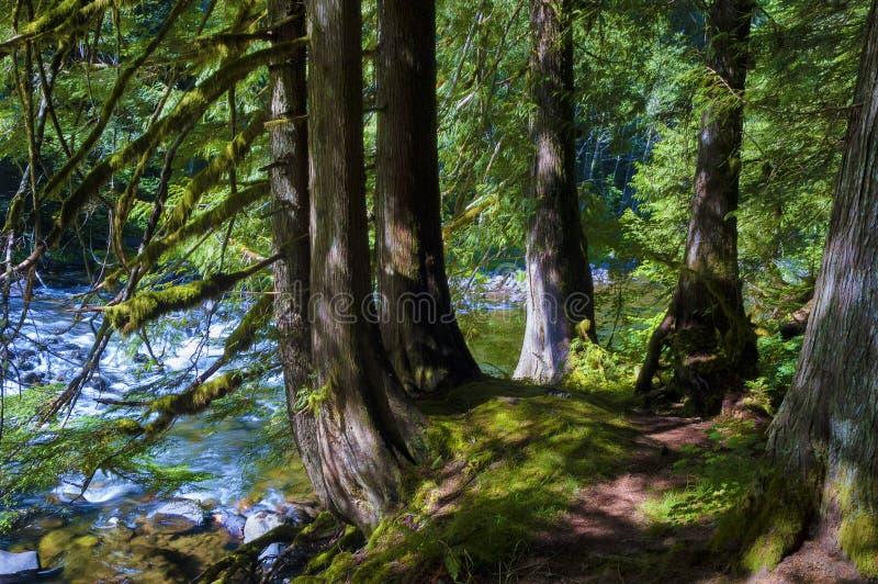 Wycieczkujący Mt Kapiszonu lasu państwowego łososia rzeka zdjęcie stock