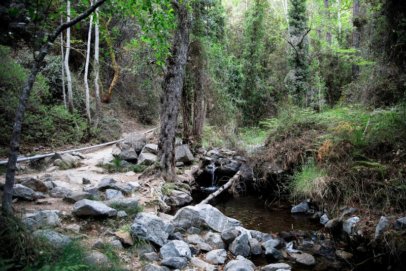 Wycieczkuje wędrówka Caledonia siklawa wzdłuż małego rzecznego strumienia blisko Platres, Cypr zdjęcie royalty free