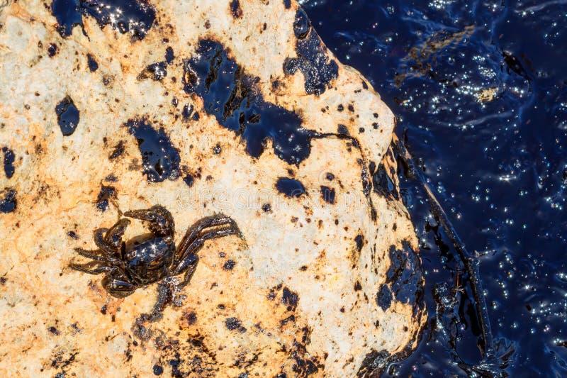 Wyciek ropy Środowiskowa katastrofa Śmierć zwierzęta Barwiarski morze fotografia royalty free