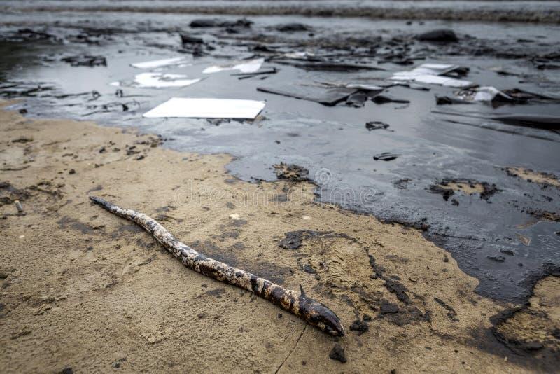 Wyciek ropy na plaży fotografia royalty free