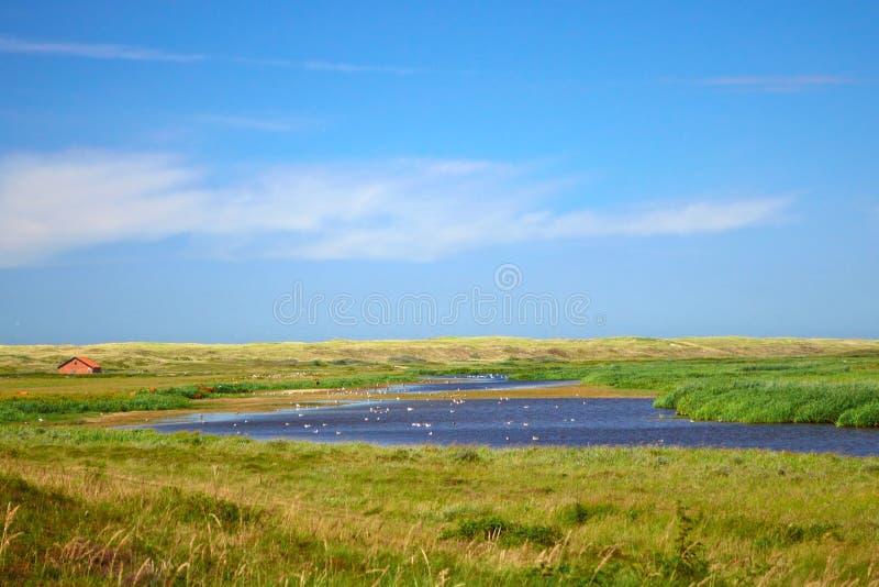 Wydmowy jeziorny De Muy przy parkiem narodowym w holandiach na wyspie Texel fotografia royalty free