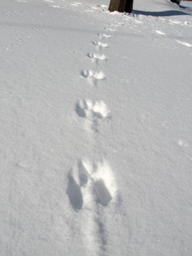 wydrukuj śnieżnej wiewiórek. zdjęcie royalty free