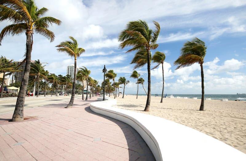 Wyginająca się ściana i podmuchowi drzewka palmowe na fort lauderdale Wyrzucać na brzeg zdjęcia royalty free