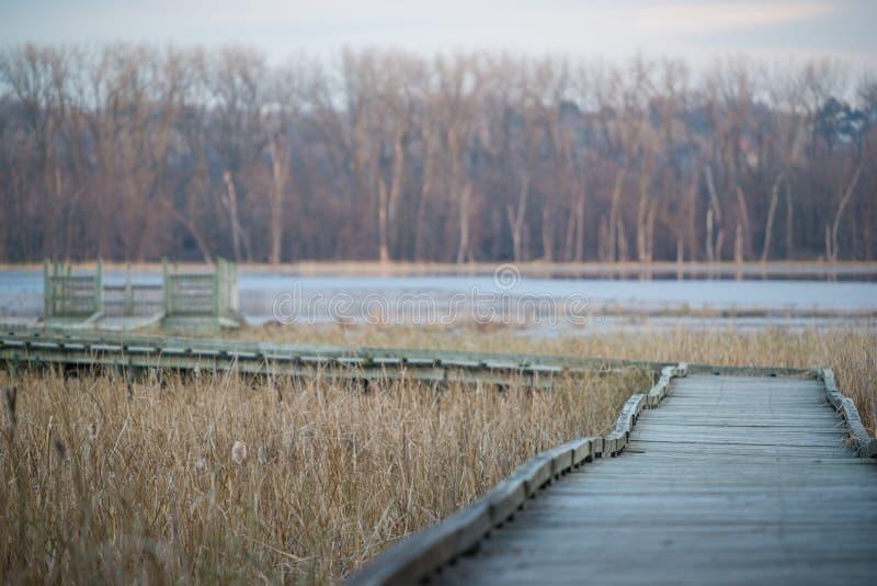 Wyginająca się boardwalk chodząca ścieżka obserwacja pokład w spadku na Minnestoa rzece w Minnestoa Dolinnym obywatelu Wildlif - obrazy stock