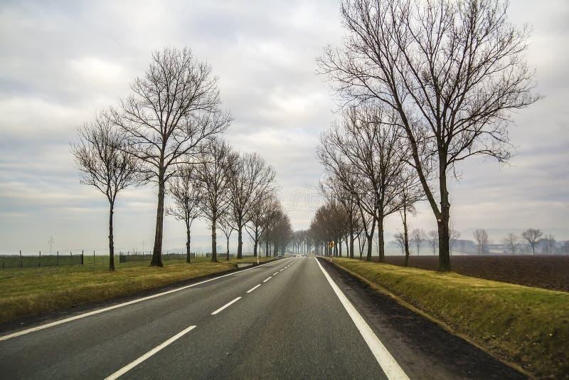 Wyginający się Dwa pasów ruchu wiejskiej drogi cewienie Przez drzew obraz royalty free