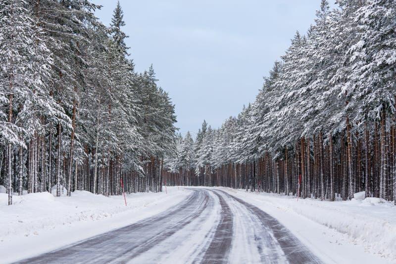Wyginający się zimy drogowy omijanie przez zwartego lasu sosny zdjęcia royalty free