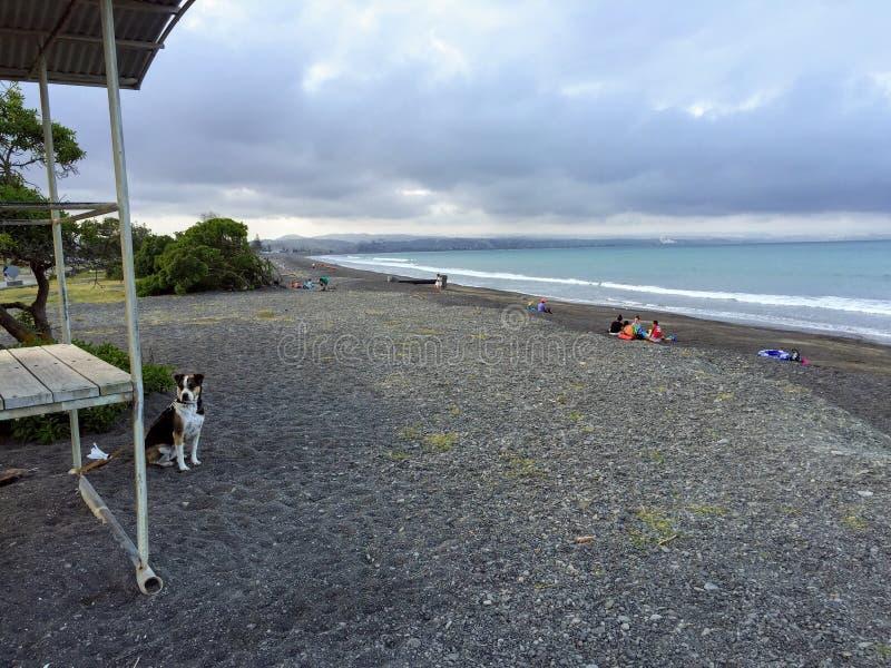 Wyjątkowo skalisty teren stawia czoło outwards Hawke zatoka Westshore plaża zdjęcie stock