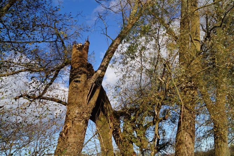 Wykorzeniający drzewa burzą fotografia stock