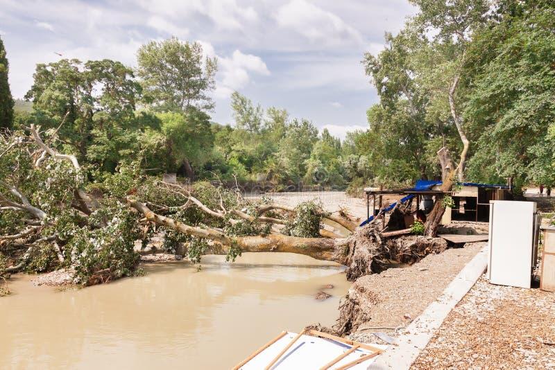 Wykorzeniający drzewa po powodzi zdjęcie royalty free