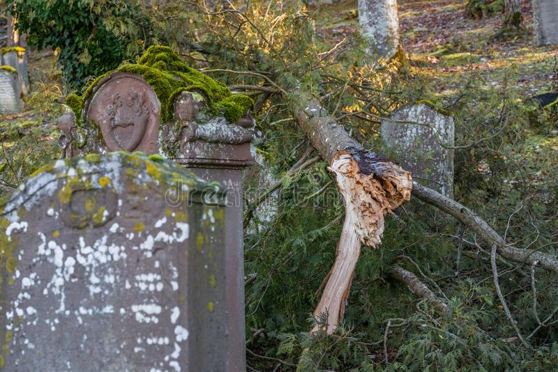 Wykorzeniający drzewo przy starym Żydowskim cmentarzem z wietrzejącymi nagrobkami, Niemcy obrazy stock