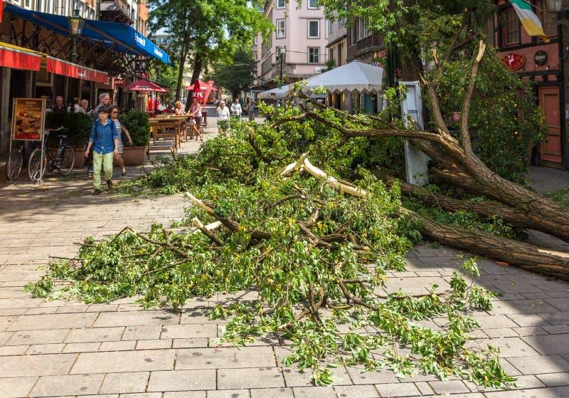 Wykorzeniający drzewo w centrum miasta Dusseldorf obraz stock