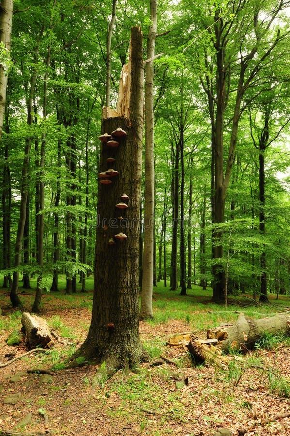 Wykorzeniający drzewo w trawie zdjęcie royalty free